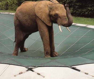 An elephant standing on a Loop Lok safety cover.